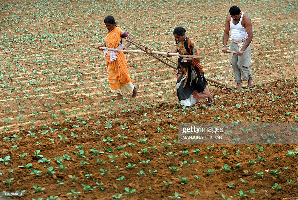 """An Indian farmer ploughs his field with the help of family members on the outskirts of Bangalore on August 3, 2012. The Indian Meteorological Department has backtracked on their projections of monsoon revival, declaring that the country will have """"deficient monsoon"""" in 2012. The Planning Commission on August 3 warned that a deficient monsoon is likely to pull down the economic growth in the current fiscal to about six per cent, from 6.5 per cent a year ago. AFP PHOTO/Manjunath KIRAN"""
