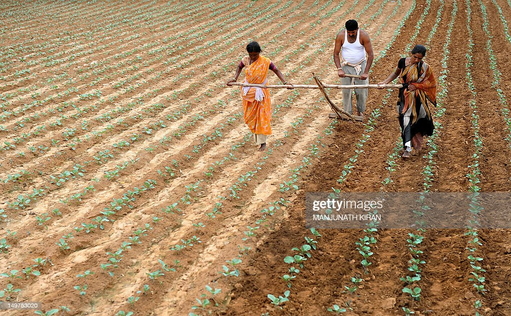 "An Indian farmer ploughs his field with the help of family members on the outskirts of Bangalore on August 3, 2012. The Indian Meteorological Department has backtracked on their projections of monsoon revival, declaring that the country will have ""deficient monsoon"" in 2012. The Planning Commission on August 3 warned that a deficient monsoon is likely to pull down the economic growth in the current fiscal to about six per cent, from 6.5 per cent a year ago. AFP PHOTO/Manjunath KIRAN"