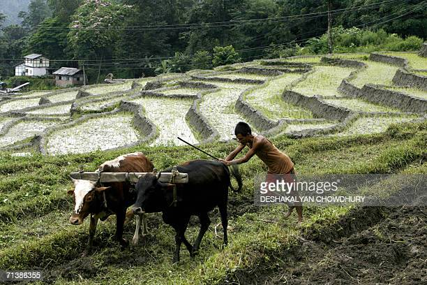 An Indian farmer tills the field at the village of Kitang close to Gangtok capital of India's northeastern state of Sikkim 07 July 2006 Indian...