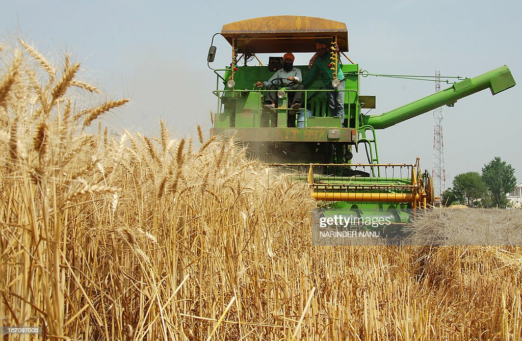 An Indian farmer uses a combine to plough a wheat field on the outskirts of Amritsar on April 20, 2013. Punjab is India's largest wheat producing state, contributing nearly 70 percent of the national total.