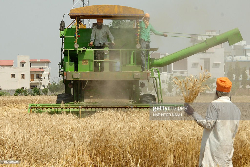 An Indian farmer watches a combine plough a wheat field on the outskirts of Amritsar on April 20, 2013. Punjab is India's largest wheat producing state, contributing nearly 70 percent of the national total.