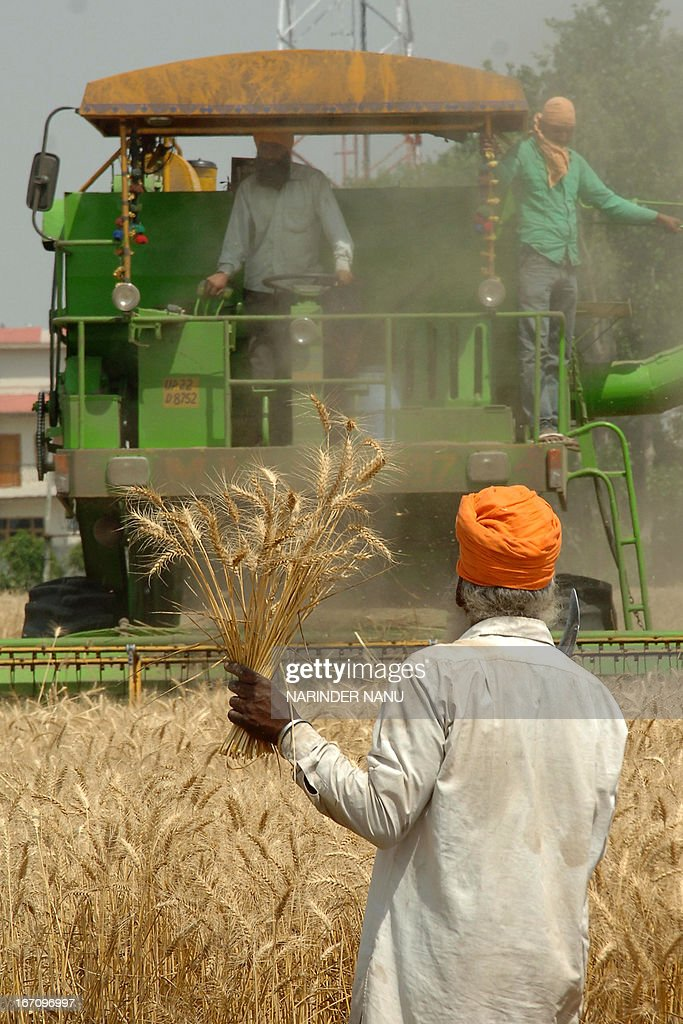 An Indian farmer watches a combine plough a wheat field on the outskirts of Amritsar on April 20, 2013. Punjab is India's largest wheat producing state, contributing nearly 70 percent of the national total. AFP PHOTO/NARINDER NANU