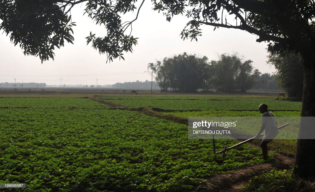 An Indian farmer works in his field as he plants potatos at Rajganj village, some 10,kms from Siliguri on January 17, 2013. Nearly two-thirds of India's more than 1.1 billion population still depend on agriculture for their livelihood. AFP PHOTO/Diptendu DUTTA