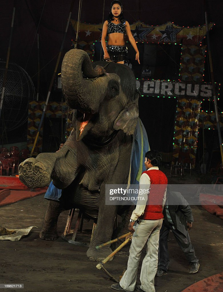 An Indian female performer rides an elephant during a show at the Kohinoor Circus in Siliguri on January 14, 2013. The Kohinoor Circus, inaugurated in 1988, is one of the most popular as it travels throughout India. At present, there are only ten circuses still active in India whereas in the first half of the 20th century, there were as many as 50 circuses touring the country. AFP PHOTO/ Diptendu DUTTA