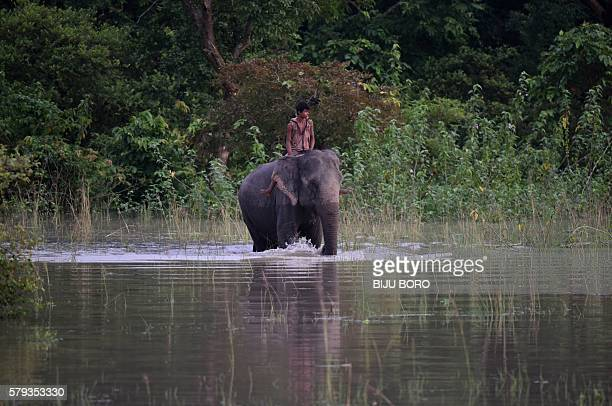 An Indian forest guard rides an elephant through flood waters in a submerged area of the Pobitora wildlife sanctuary in India's northeastern Assam...
