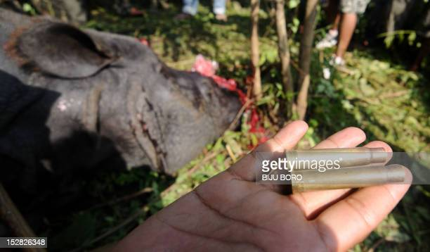 An Indian forest official shows the bullets used by poachers to shoot a one horned horn Rhinoceros which was killed and dehorned by the poachers at...