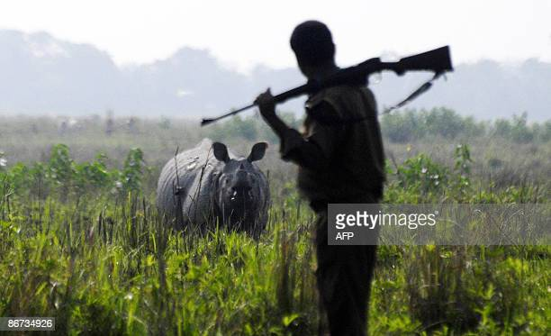 An Indian forest official takes part in counting the Indian one horned rhinoceros during a population census at the Pobitora Wild Life Sanctuary...