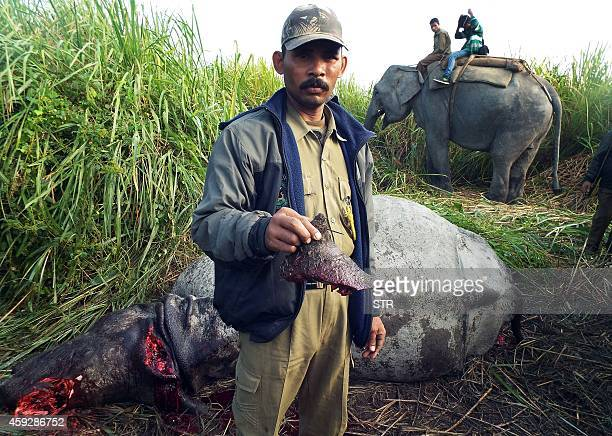 An Indian forest worker displays the rhinoceros horn after a female rhinoceros was killed by a poachers bullet at Kohora range under Kaziranga...