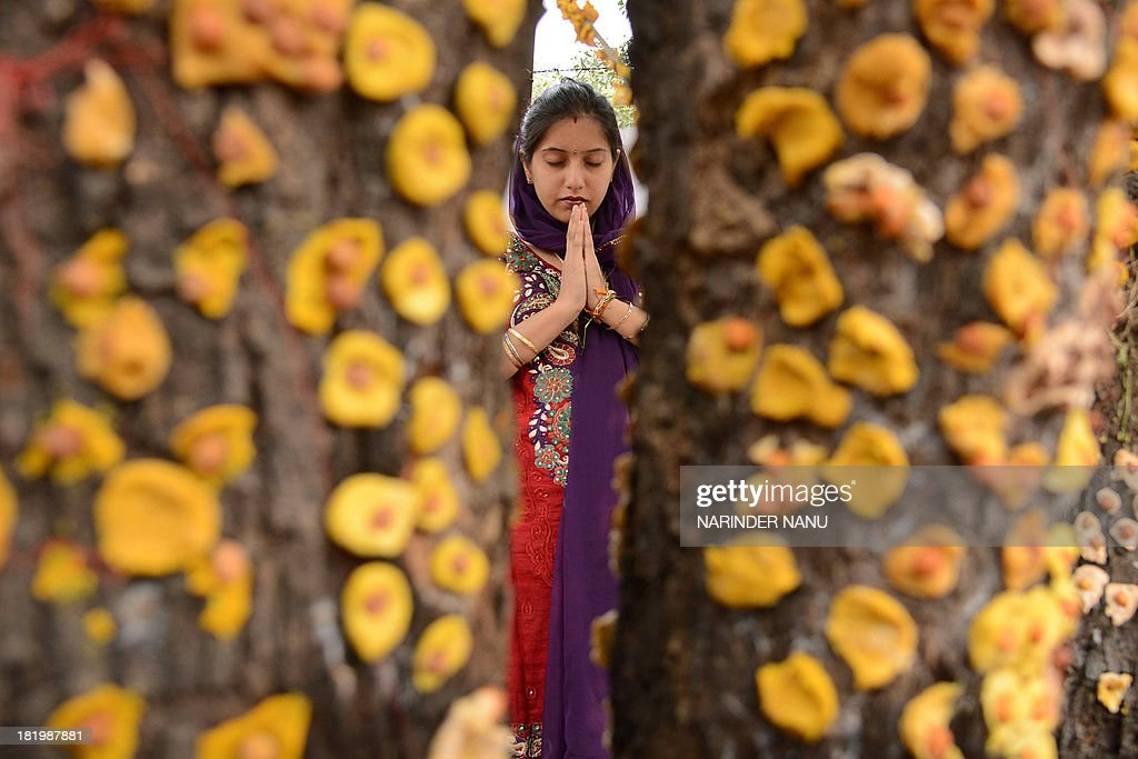 An Indian Hindu devotee prays in front of a ber tree, on the occasion of Maha Laxmi Vrat outside a Shiv Temple in Amritsar on September 27, 2013. Devotees pray as they seek the blessings of Mahalakshmi the wife of Vishnu who is said to bring wealth and prosperity. AFP PHOTO/NARINDER NANU