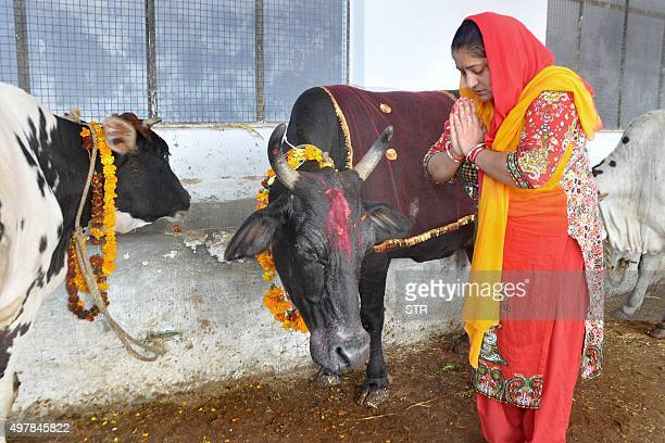 An Indian Hindu woman worships a cow as she observes the Gopal Ashtami festival at a cow shelter in Jammu on November 19 2015 Gopal Ashtami festival...