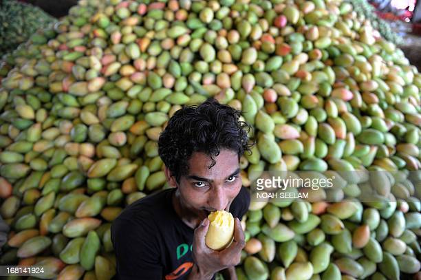 An Indian labourer eats a mango at the Gaddiannaram Fruit Market on the outskirts of Hyderabad on May 6 2013 The ruling Indian Congressled government...