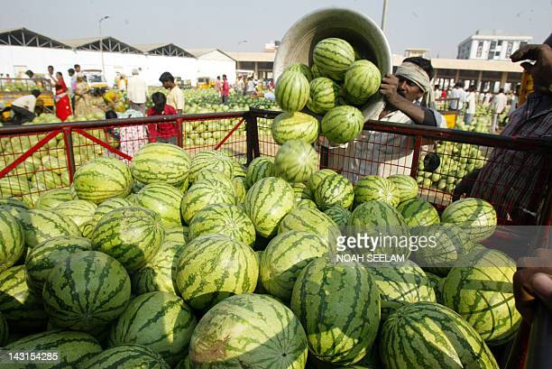An Indian labourer loads watermelons onto a vehicle at a wholesale fruit market on the outskirts of Hyderabad on February 10 2009 The agricultural...