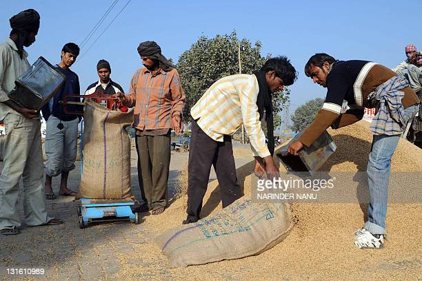 An Indian labourer uses a sieve to separate rice husks from the grain at the Grain Market in Amritsar on November 6 2011 As a cereal grain it is the...