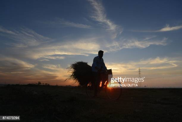 An Indian man carries bundles of rice from a paddy field on his bike on the outskirts of Siliguri on November 14 2017 / AFP PHOTO / DIPTENDU DUTTA
