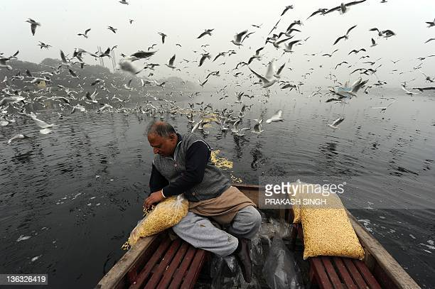 An Indian man feeds flocks of migratory birds in the Yamuna river in New Delhi on January 2 2012 Hundreds of migratory birds from Siberia southeast...