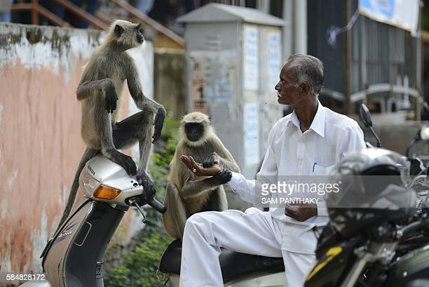 TOPSHOT An Indian man feeds peanuts to monkeys along a busy street in Ahmedabad on July 31 2016 Feeding animals is sacred in Hindu society / AFP /...