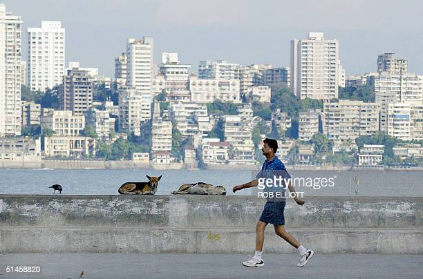 An Indian man gets in early morning exercise against a backdrop of a section of the city as dogs rest along Marine Drive in Bombay 10 October 2004...