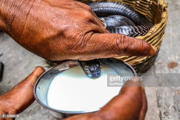 An Indian man offers milk to snake during the worship of 'Naag' on the occasion of 'Naag Panchami' in Jaipur Rajasthan India on 14th July2017