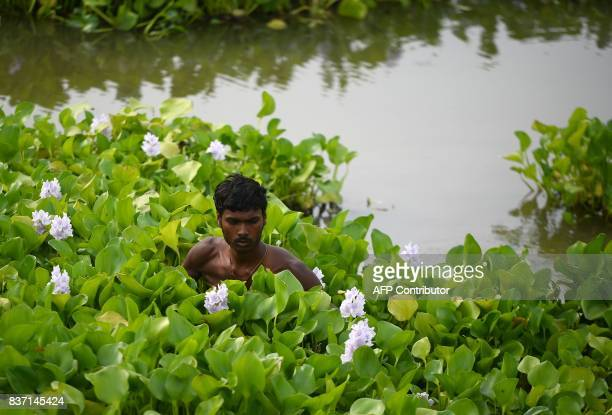 TOPSHOT An Indian man removes nasturtium from a pond in preparations ahead of the Ganesh Chaturthi festival where Ganesh idols will be immersed near...