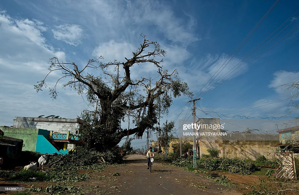 An Indian man rides a bicycle past an uprooted tree following the cyclone in Gopalpur on October 13, 2013. Cyclone Phailin left a trail of destruction along India's east coast and up to seven people dead after the biggest evacuation in the country's history helped minimise casualties.