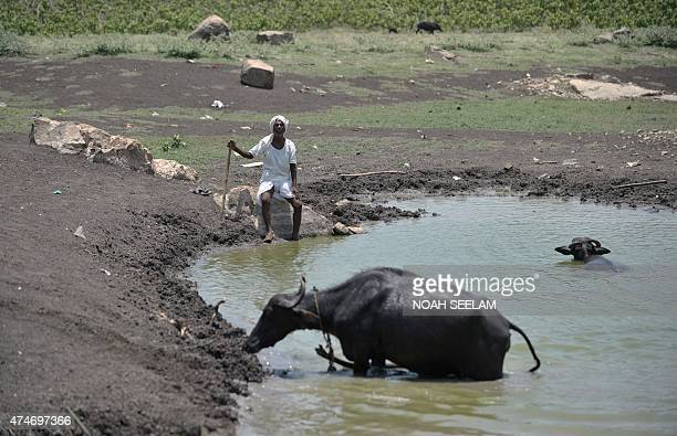 An Indian man sits under the hot sun next to his cattle on the outskirts of Hyderabad on May 25 2015 More than 430 people have died in two Indian...