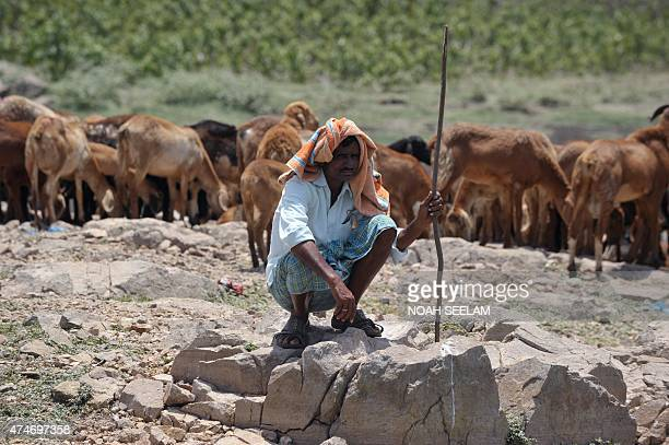 An Indian man sits under the hot sun next to his sheep on the outskirts of Hyderabad on May 25 2015 More than 430 people have died in two Indian...