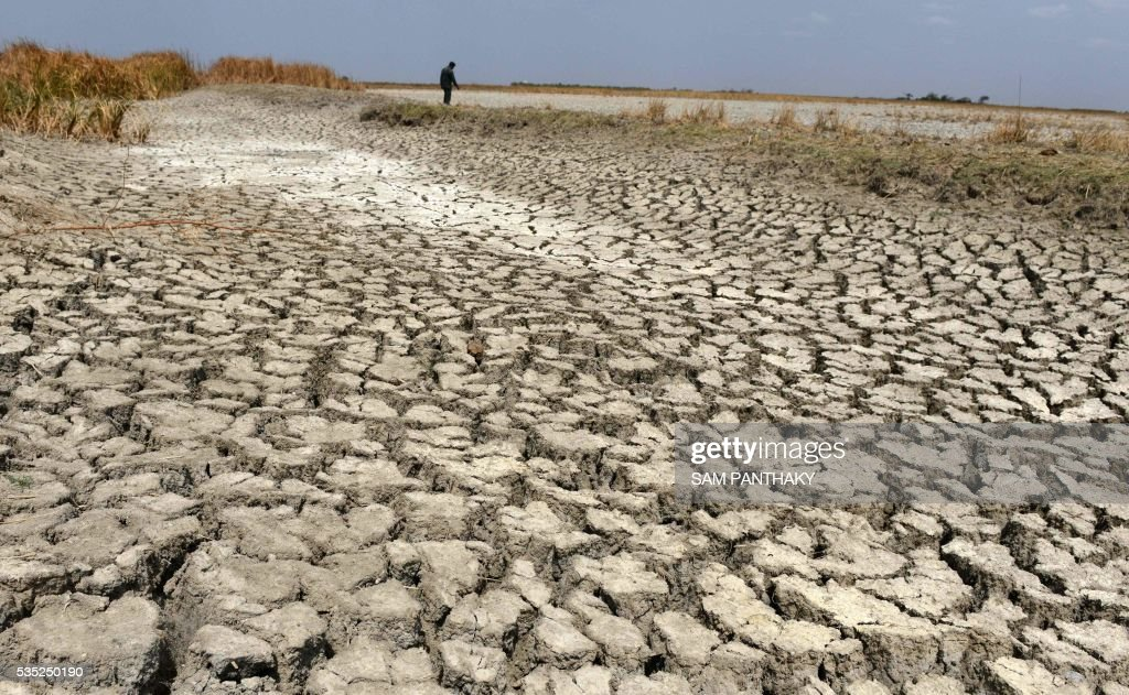 An Indian man walks on a dried out portion of wetlands at Nalsarovar Bird Sanctuary, some 70kms from Ahmedabad on May 29, 2016. Migratory flamingoes are being encouraged to stay at the wetlands in the western state of Gujarat as the locating of shoals of fish which form the diet of the flamingos, is made easier with the falling levels of water which are the result of drought conditions which are prevailing across northern India. / AFP / SAM