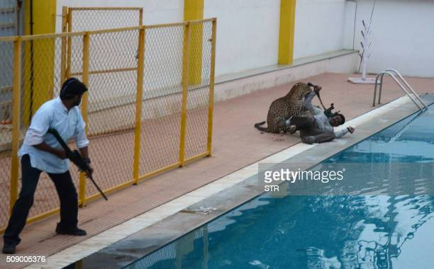 TOPSHOT An Indian man with a tranquilizer gun looks on as a leopard attacks a man identified by Indian media as wildlife conservationist Sanjay Gubbi...