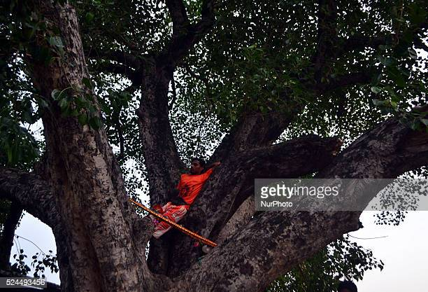 An Indian pilgrim or quotKanvariaysquot take rest on a tree during his kanwar yatrain Allahabad on August 72015The Yatra takes place during the...