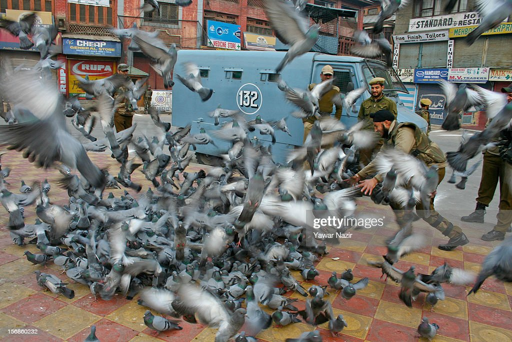 An Indian policeman catches pigeons as his colleagues stand watch at the city centre during restrictions on November 23, 2012 in Srinagar, the summer capital of Indian administered Kashmir, India. Hundreds of Shiite Muslim mourners were detained by the Indian police as they tried to take part in the procession. Muslims all over the world mourn during Muharram, the first month of Islamic lunar calendar, the slaying of Imam Hussain, grandson of the Prophet Mohammed who was assassinated by his political rivals along with 72 companions in 680 AD in Iran. Shiite Muslims mourn by flagellating themselves with knives and swords. India has banned any processions and similar public gatherings in Kashmir after a rebellion against Indian rule broke out in 1989.