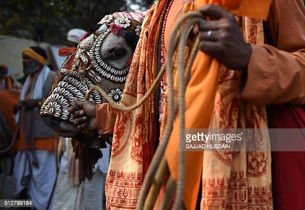 An Indian 'sadhu' holds onto a cow during a protest against the killing of cows and in favour of honouring them during a protest in New Delhi on...