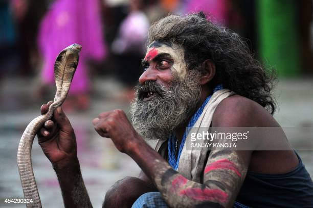 An Indian snake charmer handles a cobra while waiting for alms from Hindu devotees during the Teej festival at the Sangam in Allahabad on August 28...