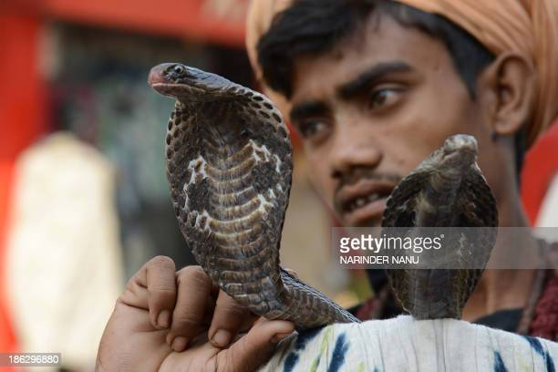 An Indian snake charmer poses with his cobras as he waits for alms from devotees outside a temple in Amritsar on October 30 2013 ahead of the Hindu...