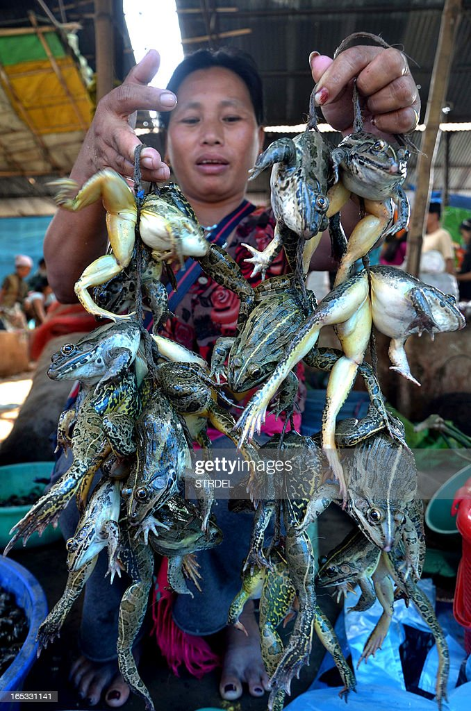 An Indian vendor poses with bunches of live frogs for sale at a market in Dimapur on April 3, 2013. Frogs, which are a delicacy among the tribal Nagas of India's north-eastern states, are found abundantly in Nagaland between April and October and some of the tribal population from the state earn their livelihood by catching frogs and selling them in the market. AFP PHOTO/STR