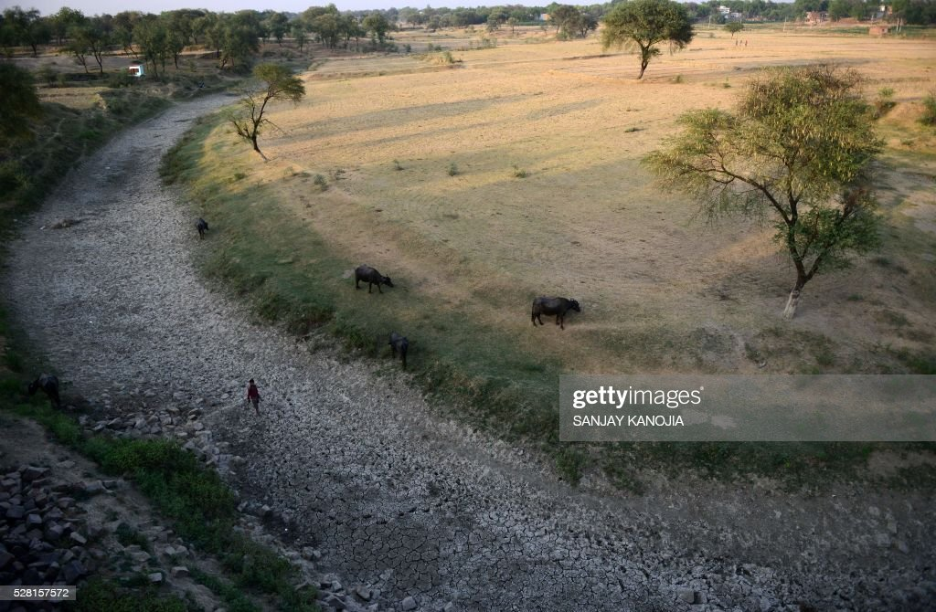 An Indian villager walks with his cattle in the dried up Mansaita River near Allahabad on May 4, 2016. Some 330 million people are suffering from drought in India, the government has said, as the country reels from severe water shortages and desperately poor farmers suffer crop losses. / AFP / SANJAY