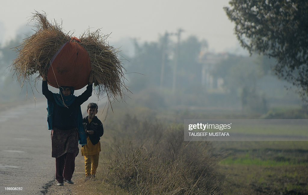 An Indian woman carries grass near the India-Pakistan border in Suchit-Garh, 36 kms southwest of Jammu, on January 11, 2013. Pakistan summoned the Indian ambassador to protest against 'unacceptable and unprovoked' attacks by the Indian army that killed two Pakistani soldiers in five days in Kashmir. AFP PHOTO/ Tauseef MUSTAFA