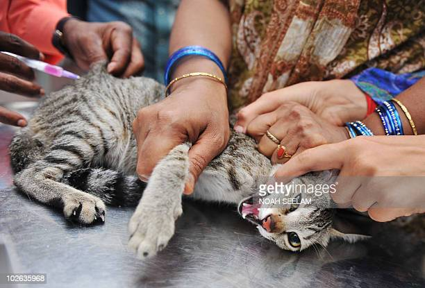 An Indian woman holds her cat steady as it receives an injection at a free vaccination camp at the Governement Super Speciality Veterinary Hospital...