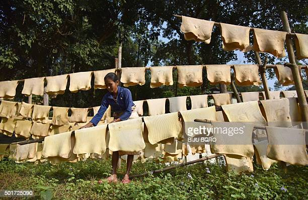 An Indian woman labourer hangs sheets of rubber to dry at a rubber farm in Thakurkuchi village some 35 kms from Guwahati the capital city of the...