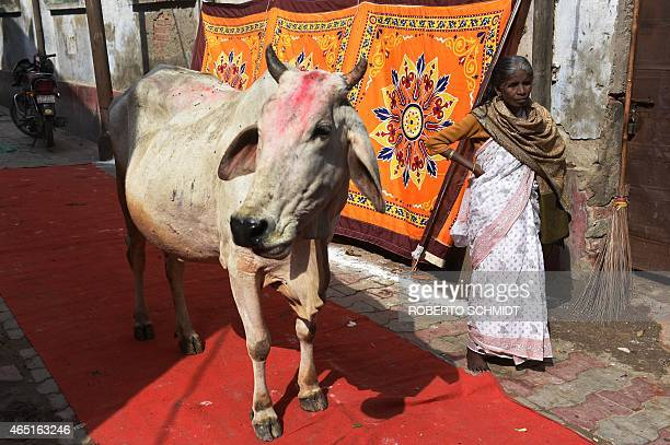 An Indian woman stands next to a cow at the entrance of an ashram before Indian widows celebrate Holi or 'festival of colors' in Vrindavan on March 3...