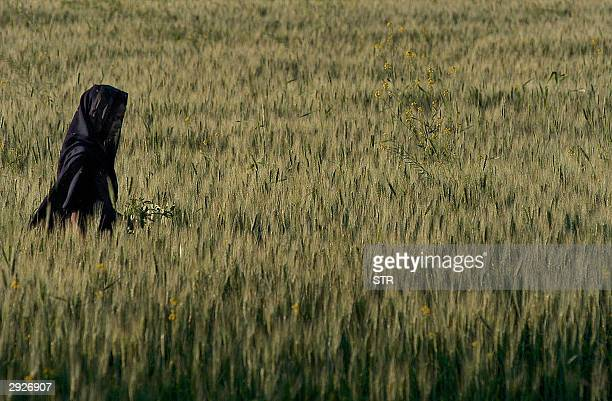 An Indian woman wife of a farmer cuts wheat crop near Ratibad village 04 February 2004 about 50 kms from Bhopal The Indian government announced 03...