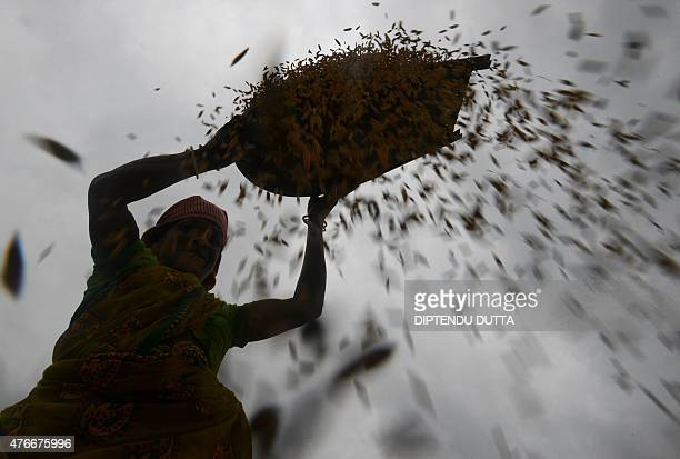 An Indian woman winnows rice by hand near a paddy field on the outskirts of Siliguri on June 11 2015 India commands over two per cent of earth's land...