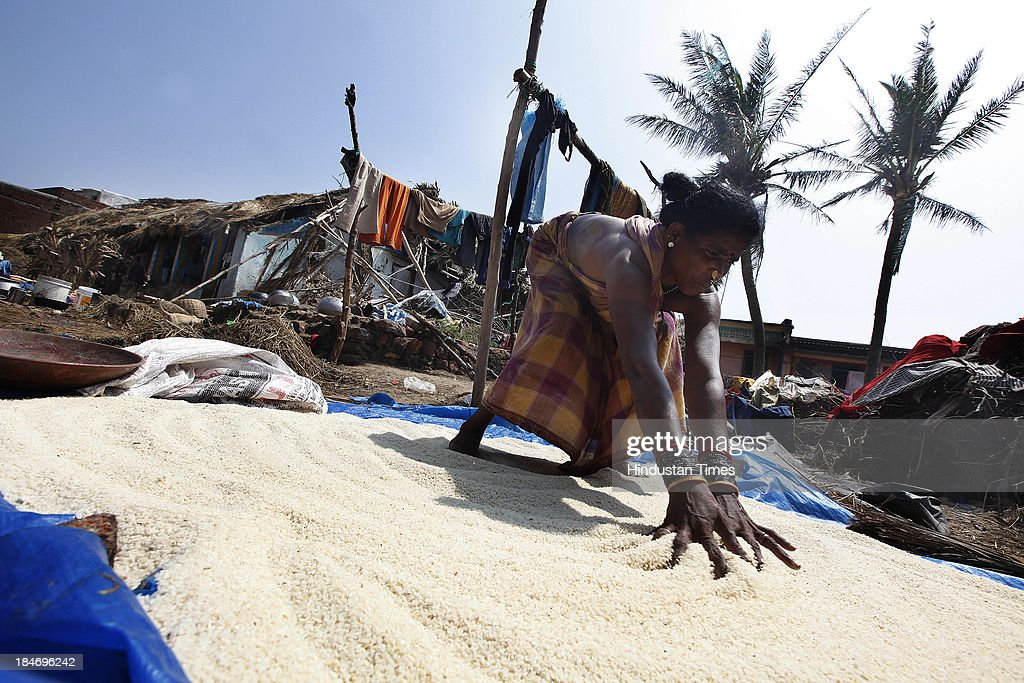 An Indian women drying the rice after Cyclone Phailin at the fishermen's village New Podampetta on October 15, 2013 about 190 kilometers south from Bhubaneswar, India. Cyclone Phailin on Sunday left a trail of destruction knocking down lakhs of homes affecting nearly 90 lakh people and destroying paddy crops worth about Rs 2,400 crore, but Odisha and Andhra Pradesh escaped from widespread loss of life due to timely and efficient evacuation efforts .
