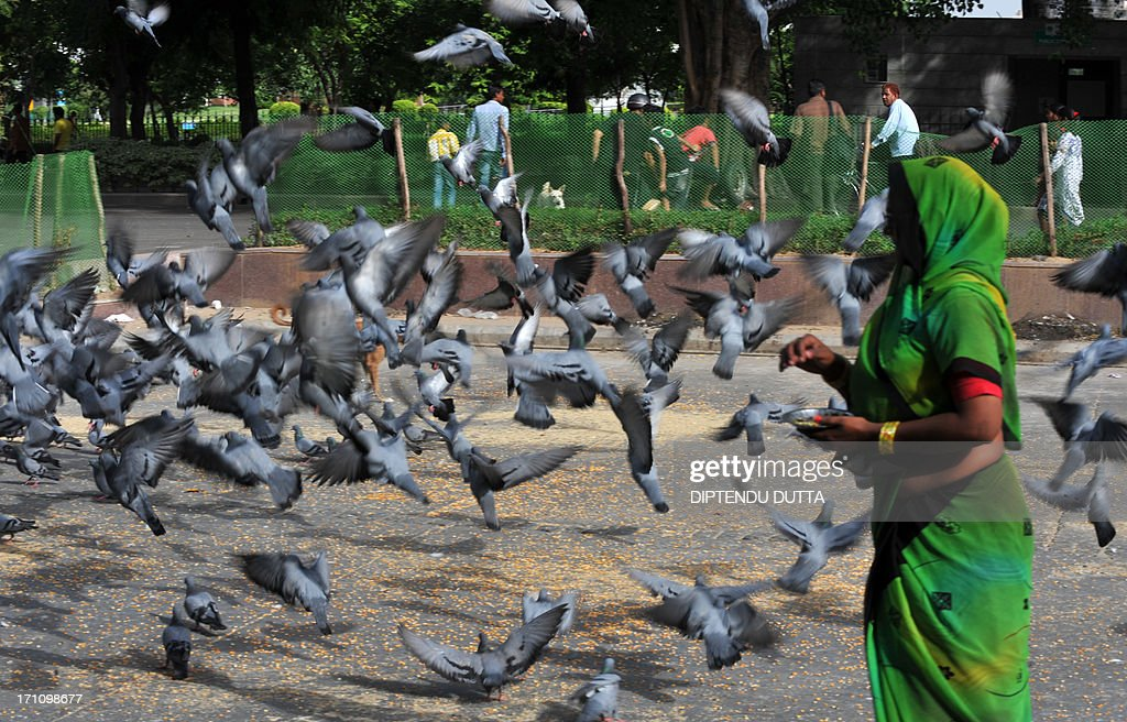An Indian women feeds pigeons at Connaught place in New Delhi on June 22,2013. India's economy grew by 5.0 percent in 2012/2013, its slowest annual rate in a decade, data showed recently in another blow to the corruption-hit government ahead of national elections due by next year.AFP PHOTO/Diptendu DUTTA