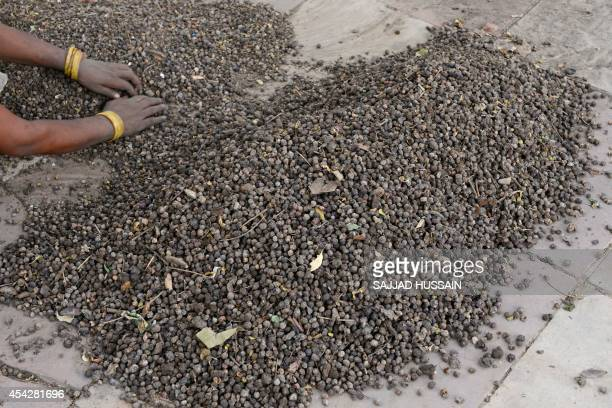 An Indian women sorts jamun seeds on a roadside pavement in New Delhi on August 28 2014 The seeds which come from the popular seasonal jamun fruit...