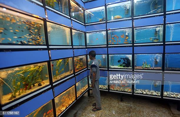 An Iraqi boy looks at fish at the AlGhazel animal market in the capital Baghdad on February 19 2016 The AlGhazel market is one of the largest animal...