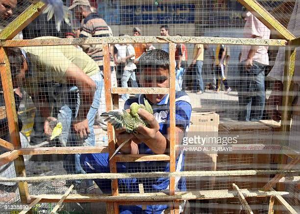 An Iraqi boy takes a bird from a cage as he sells it in alGhazel market in Baghdad on October 2 2009 The market which is specialised in selling all...