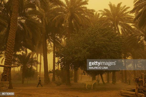 An Iraqi boy walks past a donkey during a standstorm in a farming area in Arab Jabur on the southern edge of Baghdad on April 17 2008 A suicide...