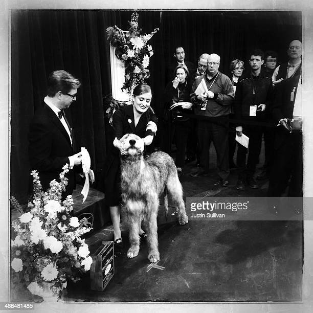 An Irish Wolfhound named 'Kuriann Of First Avenue' sits in the winners cirle after taking fourth place in the Hounds group competition during the...