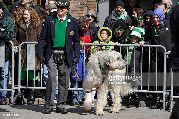 An Irish Wolfhound takes part in the South Boston 2013 St Patrick's Day Parade on March 17 2013 in South Boston Massachusetts