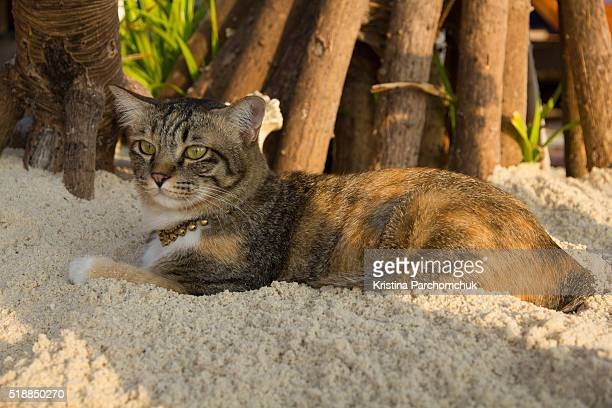 An island cat watching the sunrise on Koh Lipe, Thailand.